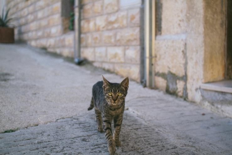 rachel-walker-portrait-photography-travel-london-split-croatia-24
